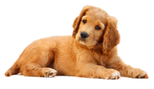 dog-png-image-1